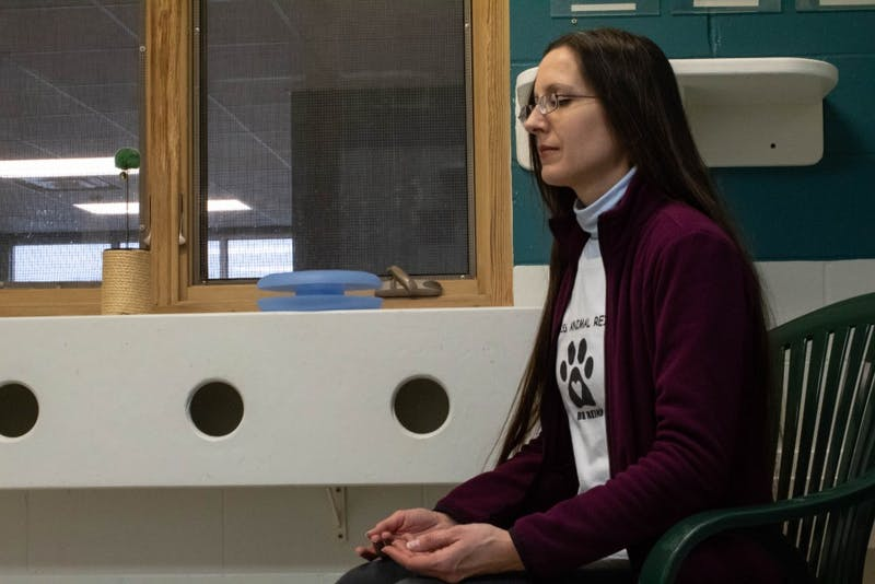 """Kat Forgacs practices reiki with cats Feb. 5 for World Animal Reiki Day at the Bloomington Animal Shelter. Forgacs said, """"Today is a special day for reiki that has been created to help advocate for this practice and also to celebrate it."""""""