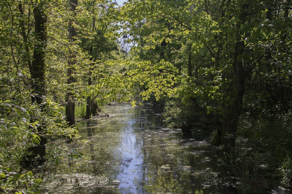<p>Wetlands appear at the Beanblossom Bottoms Nature Preserve in Ellettsville, Indiana. The Indiana Senate passed Senate Bill 389 in early February, which would originally remove protections for more than 80% of Indiana's wetlands. </p>