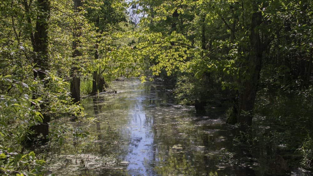 Wetlands appear at the Beanblossom Bottoms Nature Preserve in Ellettsville, Indiana. The Indiana Senate passed Senate Bill 389 in early February, which would originally remove protections for more than 80% of Indiana's wetlands.