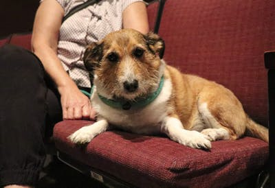 Jake, a 7-year-old rescue dog, lounges with his owner Susan Krieg at a showing of short films from the New York Dog Film Festival on Sept. 22 at the Buskirk-Chumley Theater. The showing was open to dogs on leashes that were fixed and up to date on their rabies vaccinations.