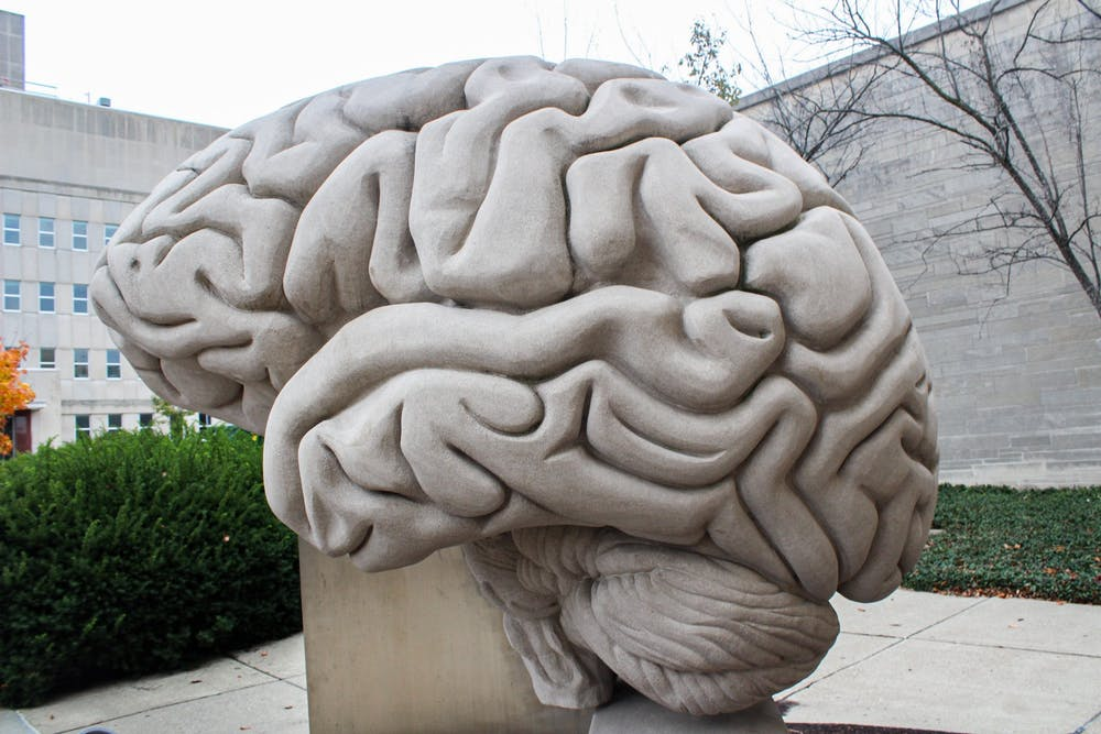 <p>A brain sculpture is seen Oct. 28 outside of the Psychology Building. A new model of the human brain has been constructed by a team of IU neuroscientists to study brain diseases.</p>