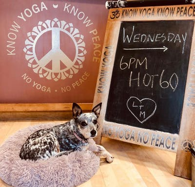 Matilda sits in front of a sign for a yoga class at Know Yoga Know Peace. The studio is leading one-hour virtual yoga sessions at 10 a.m. Sundays and 6 p.m. Wednesdays.