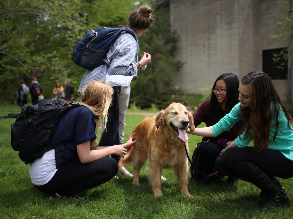 Students play with Max, a rescue dog donated for the event by his owners, at the Rent-A-Puppy event at Dunn Meadow in 2016. Some people find playing with animals can be a good way to reduce stress.