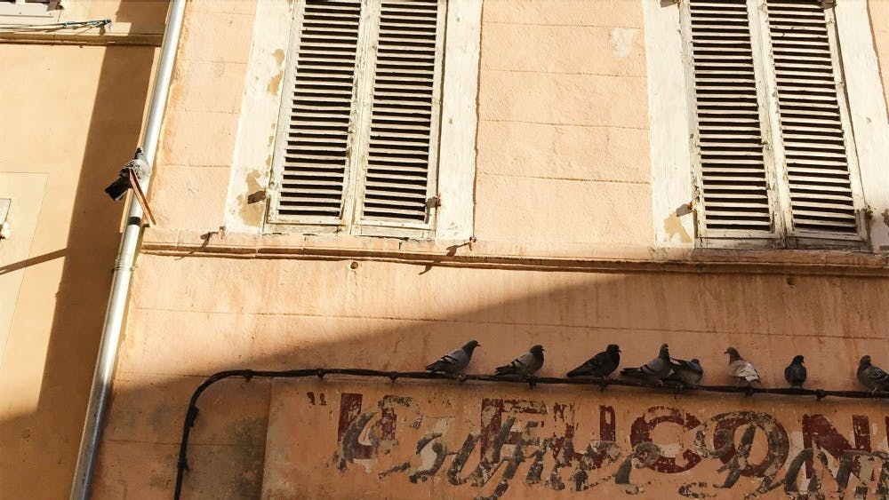 Several pigeons lounge on a restaurant sign in Marseille, France.
