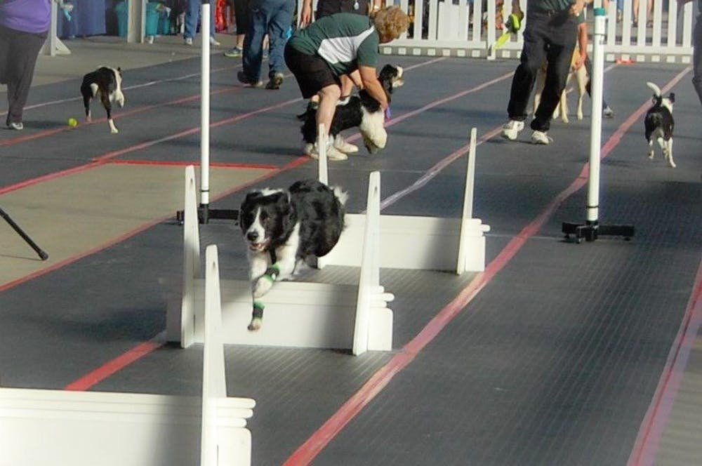 <p>As trainers prepare the next dog behind the start/finish line, a dog leaps one of four hurdles on the 51-foot flyball track.&nbsp;</p>