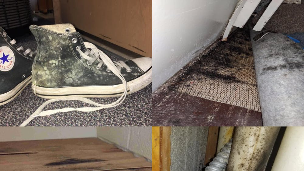 Photos from a court filing show mold in dorm rooms. Residents from sevenresidents halls at the time are suing the IU trustees after dealing with mold last semester in residence halls across campus. The lawsuit against the university has been granted class action status.