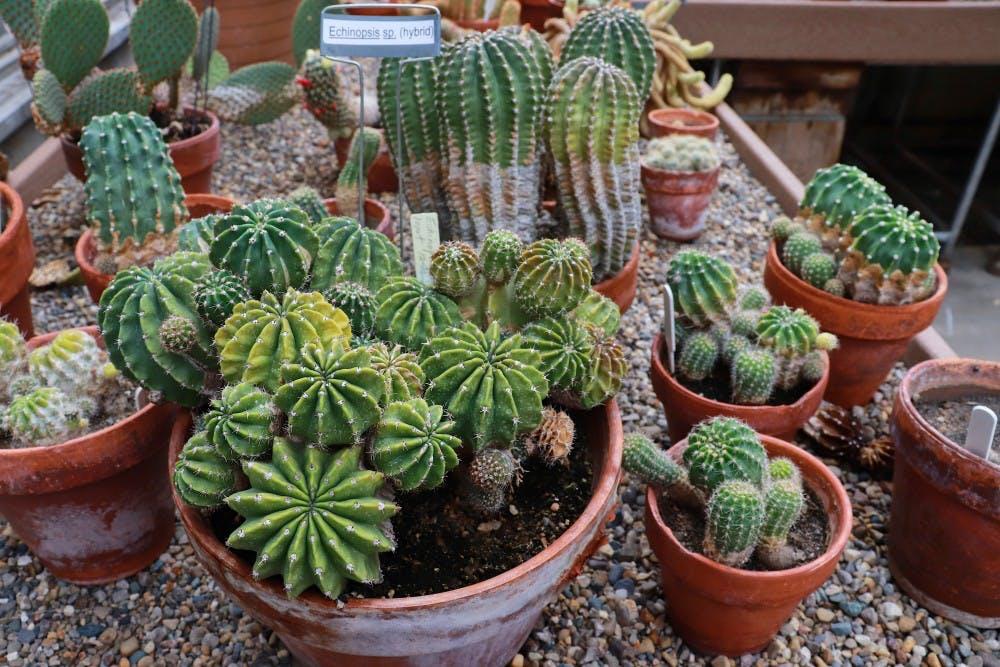 jordan greenhouse 8