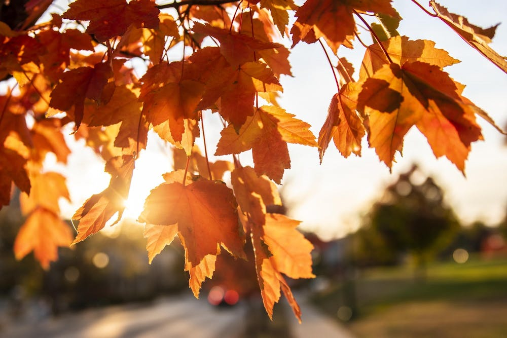 <p>The sun sets Oct. 10, 2020, behind the leaves of a tree on Seventh Street. The Bloomington Office of Innovation and Department of Public Works is sponsoring &quot;The 1,000 Households Who Can Mulch&quot; project, which encourages Bloomington residents to compost as much private yard waste as possible before the end of December.</p>