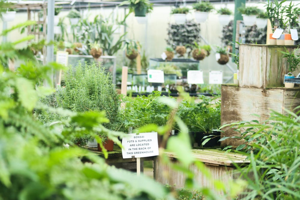 <p>Dozens of plants appear on display inside the houseplant greenhouse at Mays Greenhouse, located at 6280 Old State Road 37, on Jan. 11. Many local nurseries, including Mays, have benefited from people choosing gardening as a new hobby during recent months. </p>
