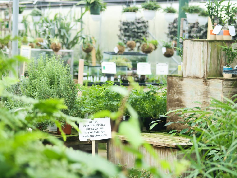 Dozens of plants appear on display inside the houseplant greenhouse at Mays Greenhouse, located at 6280 Old State Road 37, on Jan. 11. Many local nurseries, including Mays, have benefited from people choosing gardening as a new hobby during recent months.