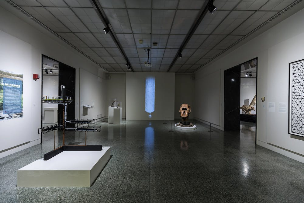 <p>The State of Nature exhibit at the Grunwald Gallery of Art features artifacts and visual art pieces that showcase Indiana's prehistoric past.</p>