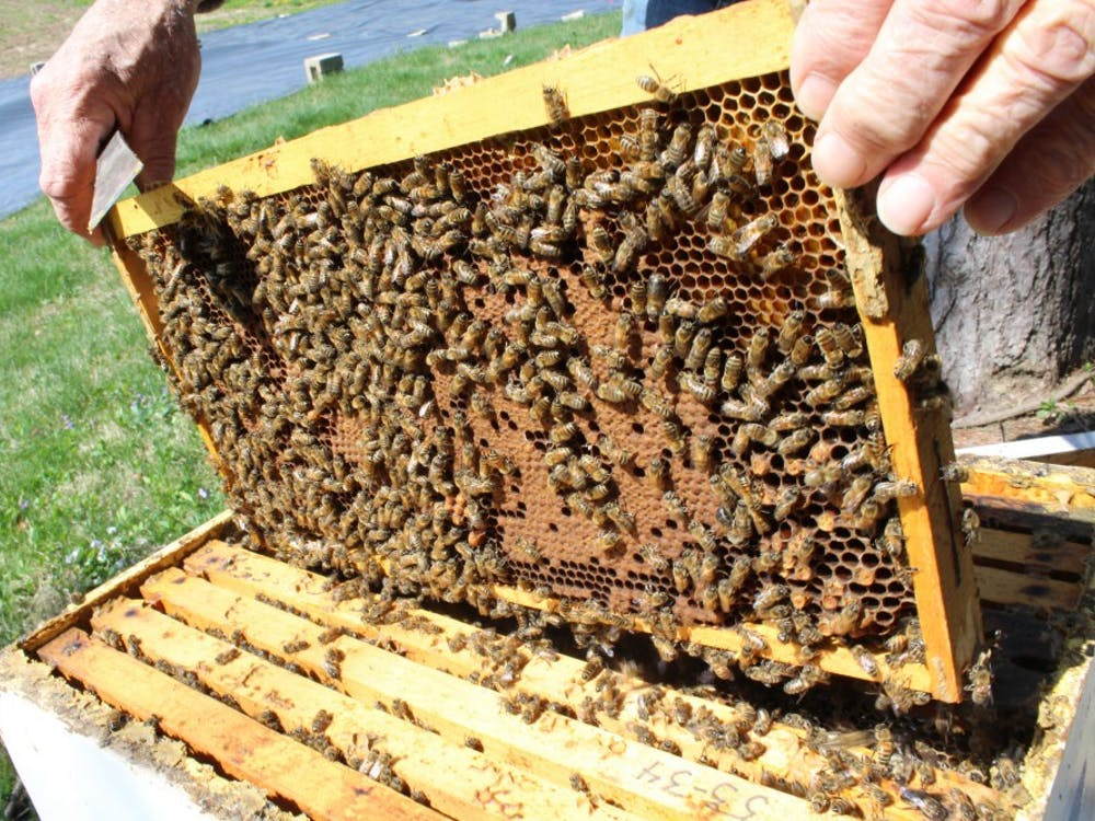 Retired IU biology professor George Hegeman replaces one of the 10 frames in his beehive at the Hilltop Garden and Nature Center.