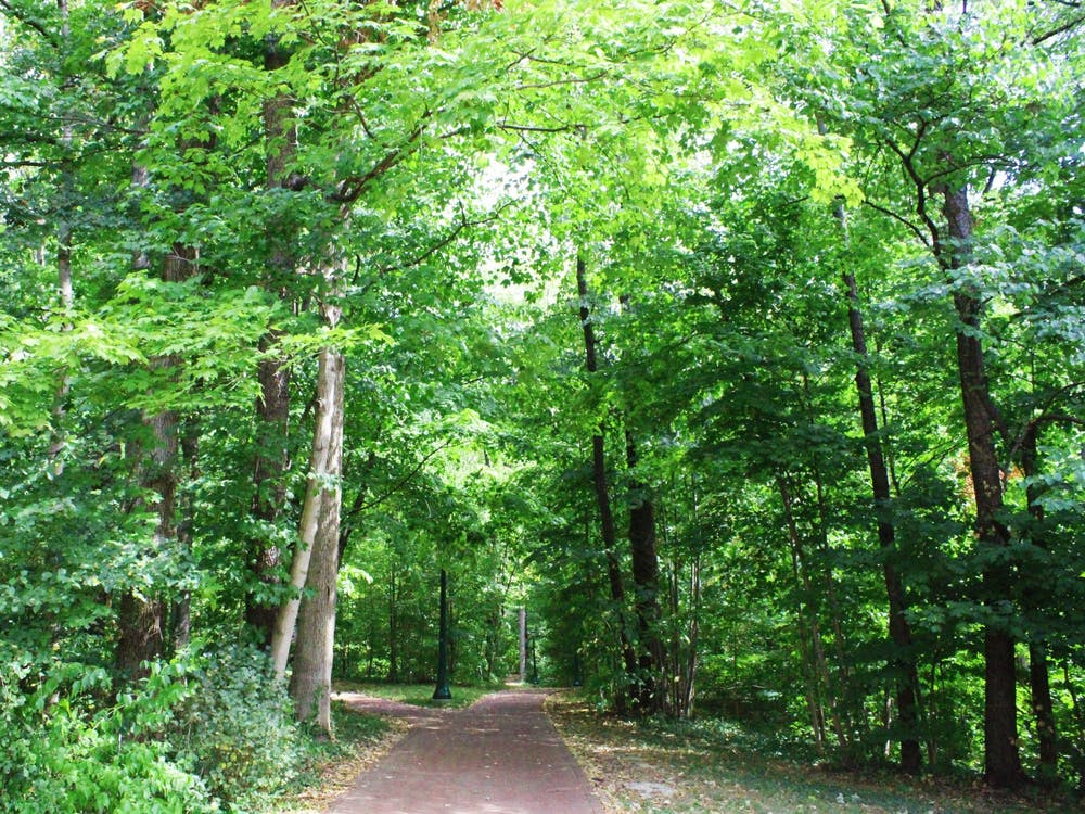 Trees line the walkways in Dunn's Woods.