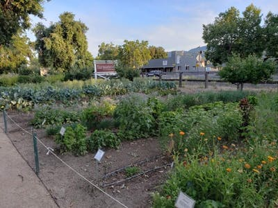 An herb and vegetable garden grows in St. Helena, California.
