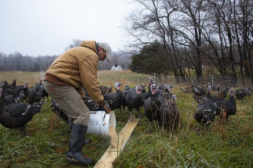 turkeyfarm5