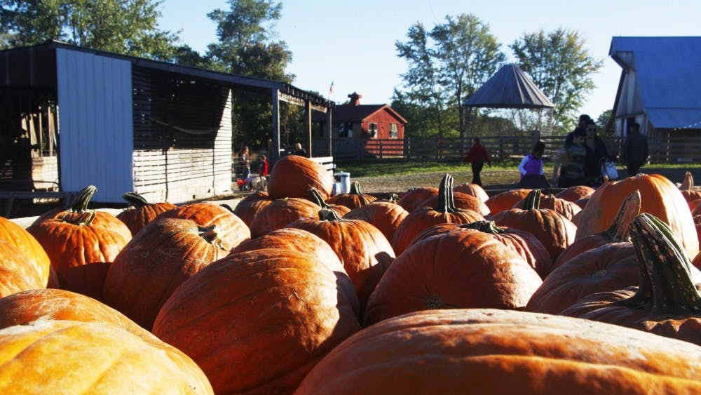 Pre-picked pumpkins sit in a trailer Oct. 21 at Fowler Pumpkin Patch. Fowler Pumpkin Patch is the only pumpkin patch in the Bloomington area.