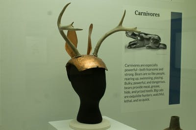 Replica deer headdress showing at the Animal-Spirit Human exhibit in the Glenn A. Black Laboratory of Archaeology.