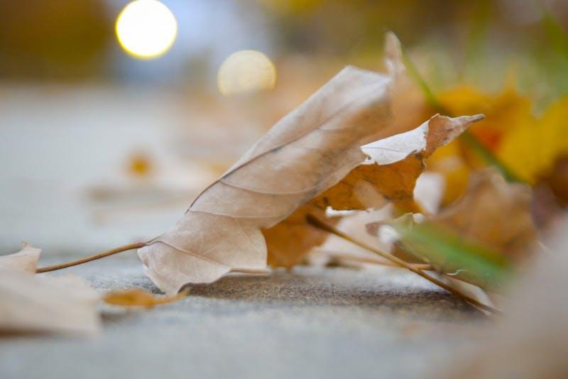 A leaf sits on the ground Nov. 8 outside Spruce Hall.