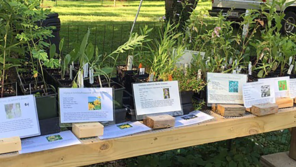 Plants sit at the Hinkle-Garten Farmstead at 2920 E. 10th St. The Farmstead will have a Daisy-Days Native Plant Sale from11 a.m. to 4 p.m. Saturday and 1-4 p.m. Sunday.