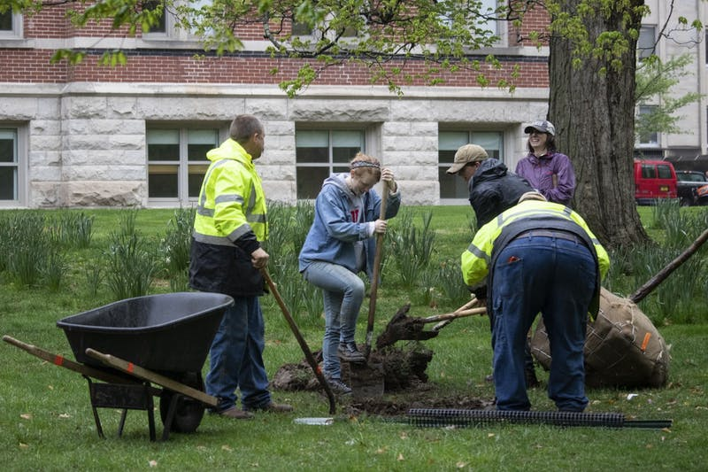 IU's landscaping services employees and students dig holes for new trees April 25, 2019, outside of Dunn's Woods.  IU Landscaping Services staff continues to plant flowers and maintain the grounds throughout the campus this spring, while students move to remote learning in response to the COVID-19 pandemic.