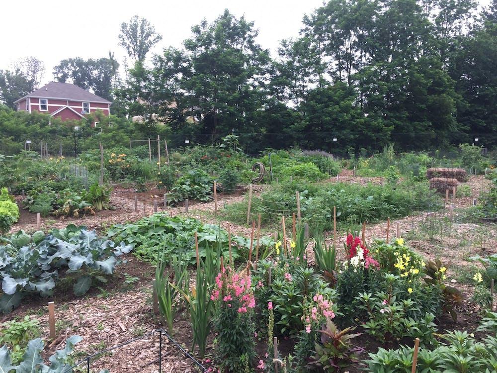 Plants fill the Butler Park Community Garden near Ninth Street in Bloomington. The application to rent out Bloomington community garden plots opened Feb. 17.