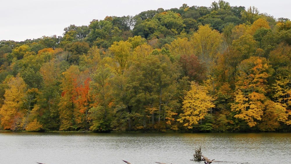 Geese fly over the water at Yellowwood State Forest. Yellowwood is just one of many locations around Bloomington to go hiking.