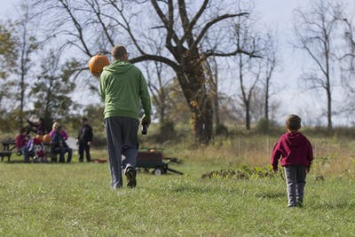 Families pick pumpkins in the pumpkin patch at Freeman Family Farms on Sunday.