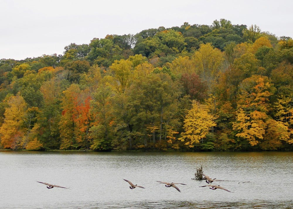 <p>Geese fly over water Oct.19th, 2017 at Yellowwood State Forest.&nbsp;</p>