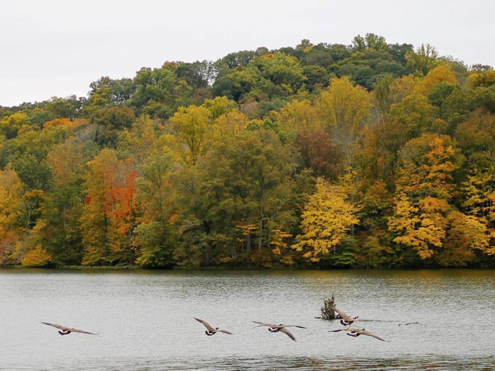 Geese fly over water Oct.19th, 2017 at Yellowwood State Forest.