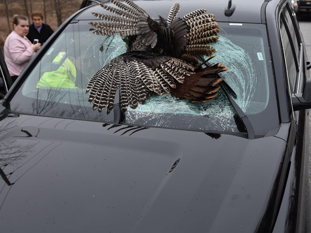 A 35-pound-turkey lodged in the windshield of John Tarabocchia's rental car. Tarabocchia was the first of three drivers to hit and kill a wild turkey in Indiana during the last week of March.