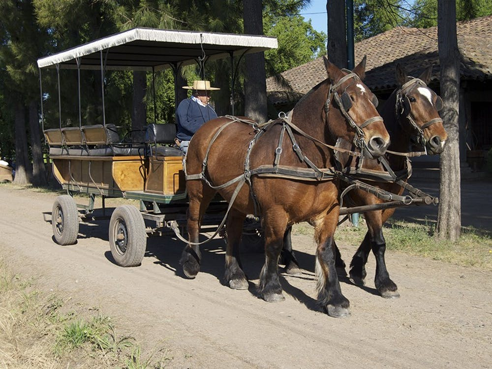 he winery provides horse-drawn carriage tours, allowing visitors to relax and enjoy the warm air and refreshing scents around the vineyard.