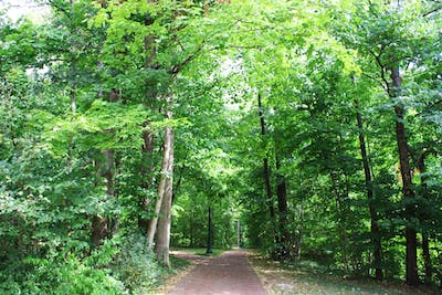 "Trees line the walkways in Dunn's Woods. ""The Hoosier Life Survey: Politics and Climate Change at the Crossroads"" questioned Hoosiers on their attitudes and beliefs about climate change."