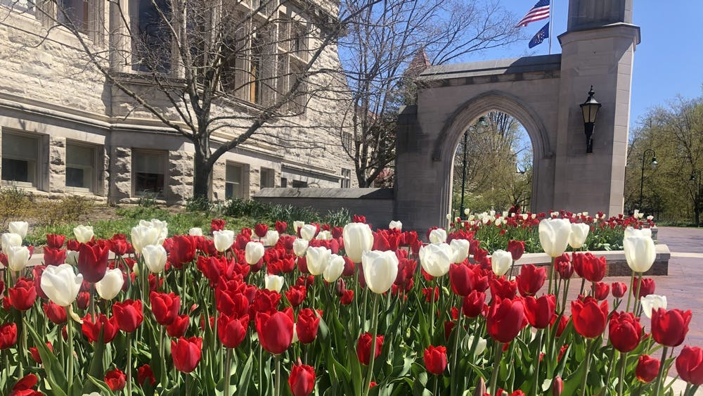 Tulips planted by the Sample Gates are pictured. IU has five scenarios planned for the 2020-2021 academic year in response to the coronavirus pandemic.