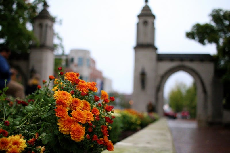 Chrysanthemums are planted in the flower beds around IU's campus. The flowers are planted at the beginning of fall, and they symbolize the changing of the seasons.