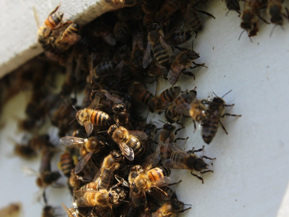Bees gather around the entrance to retired IU biology professor George Hegeman's hive. At full strength in the summer, the hive can hold as many as 60,000 bees.