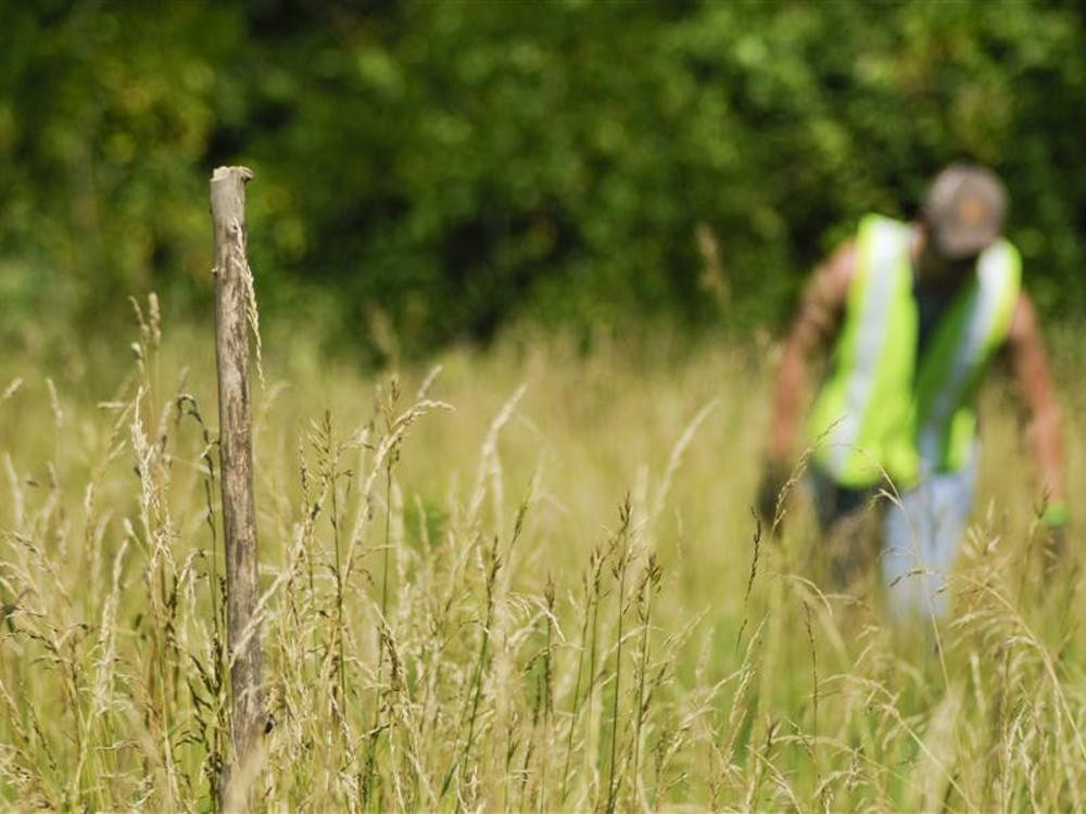 A walking stick marks bones as junior Tom Schmitt looks through tall grass during the last day of daily volunteer searches for Lauren Spierer on Wednesday near S.R. 446.
