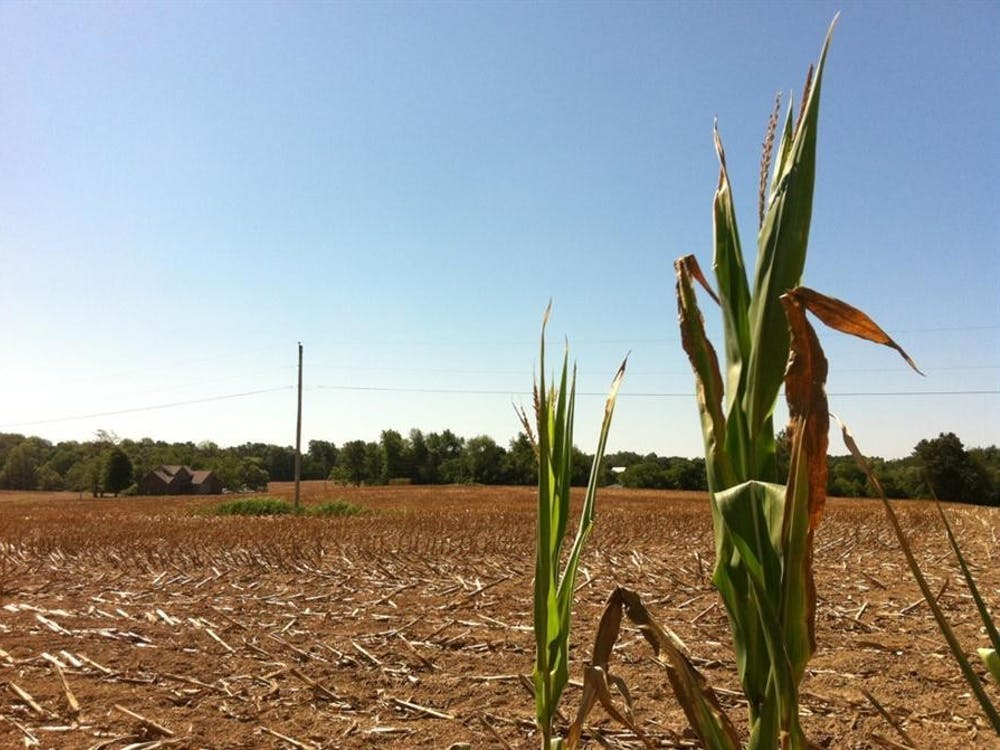 A few stalks of corn remain at the edge of a cornfield in nearby Martin County, Indiana.