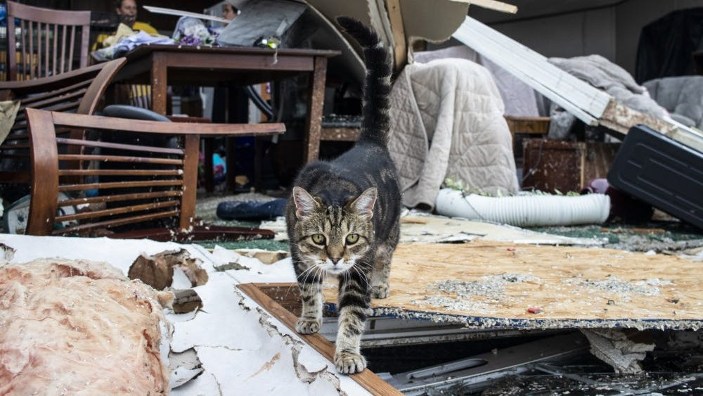 A cat named Hoosier walks across debris June 17 in the Paynter family residence. Saturday's severe storm took the entire front of the Paynter family residence.