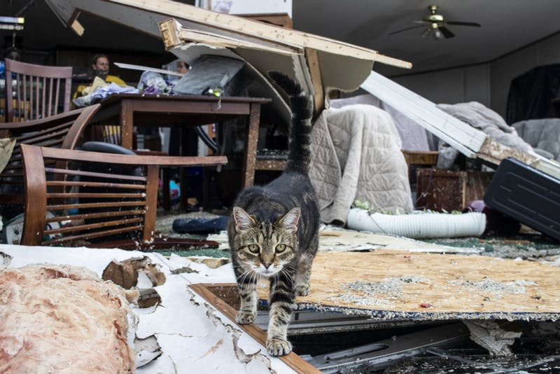<p>A cat named Hoosier walks across debris June 17 in the Paynter family residence. Saturday's severe storm took the entire front of the Paynter family residence.</p>