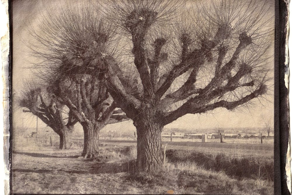 """Jeffrey A. Wolin's salted paper print """"3 Willows, Winter, Niwot, 1980"""" is a part of the Ongoing Matter exhibit coming to The Gayle Karch Cook Center for Public Arts & Humanities on Feb. 5."""