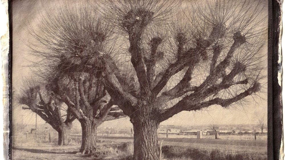 "Jeffrey A. Wolin's salted paper print ""3 Willows, Winter, Niwot, 1980"" is a part of the Ongoing Matter exhibit coming to The Gayle Karch Cook Center for Public Arts & Humanities on Feb. 5."