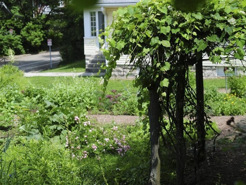The back garden of IU's Wylie House Museum, where the Wylie family grew much of their food, sits in the sunlight on June 2, 2010. The museum will give away plant seeds at the Morton C. Bradley Jr. Education Center from 12 to 5 p.m. every Friday in March.