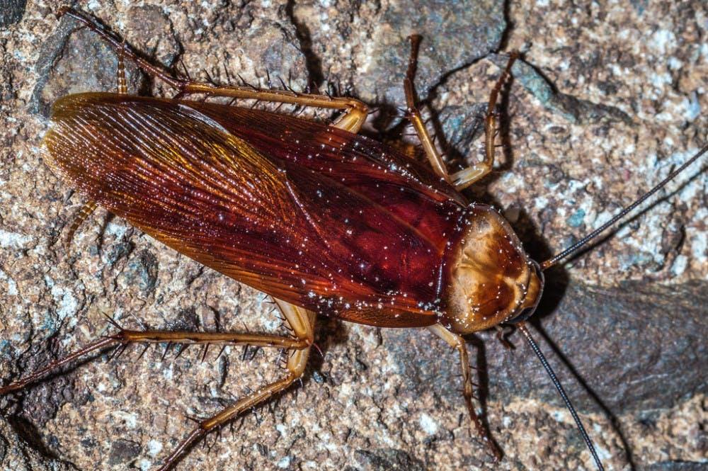B7_Roach