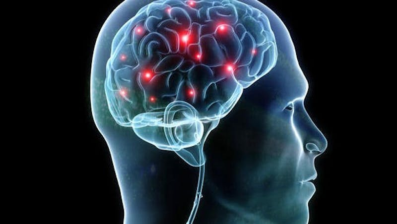 PUBLIC DOMAIN  Scientists have developed 3-D mini-brains to aid in studying brain development.
