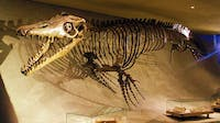PUBLIC DOMAIN Mosasaurs lived in the same time period as tyranosaurus.
