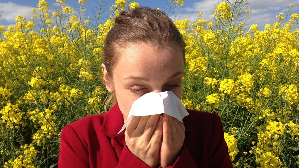 Public domain  Climate change may increase allergies and the duration of the pollen season.