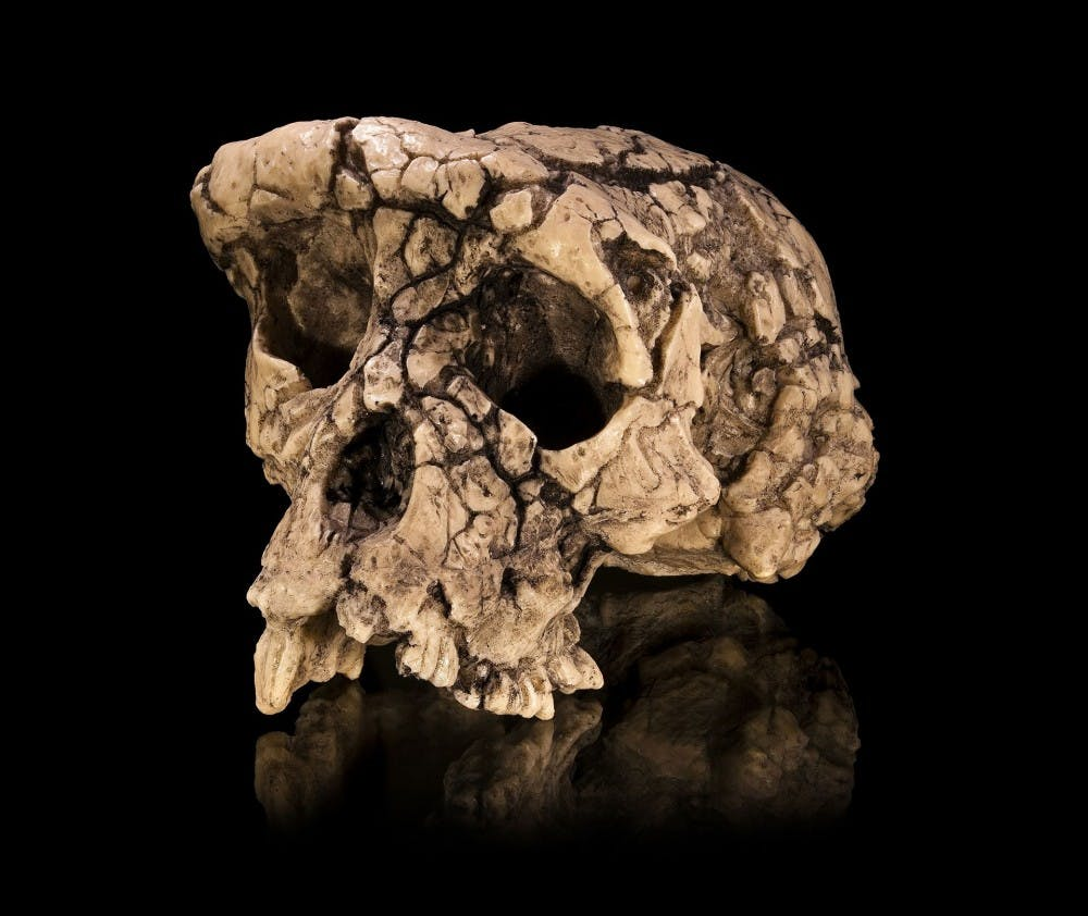 b9-human-ancestor