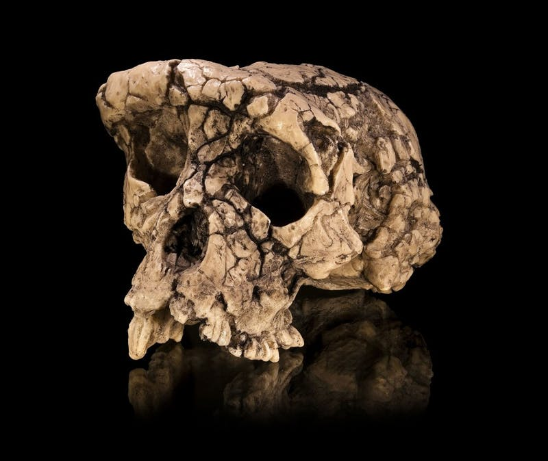 CC BY 4.0 Researchers uncovered remains believed to be the intermediate between apes and humans.