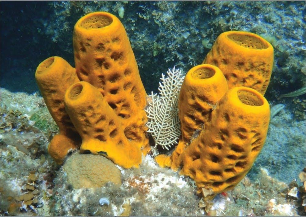 b8-sponge
