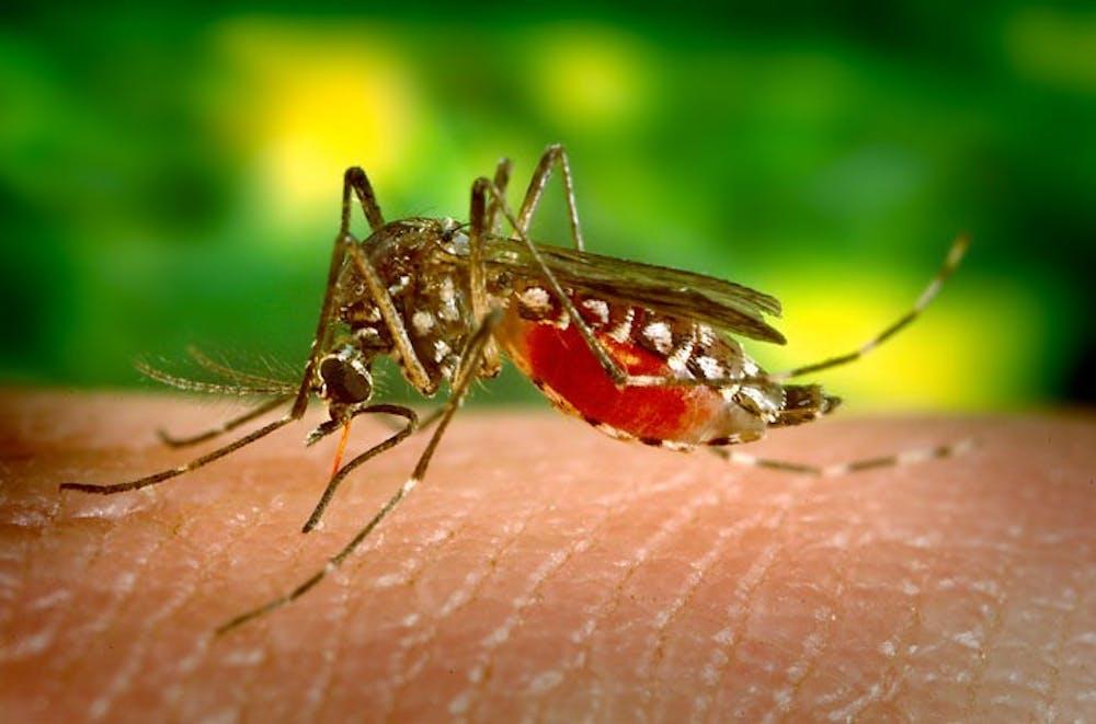 b7-top-mosquito